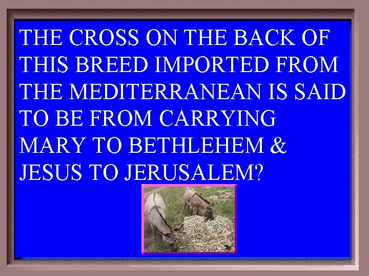THE CROSS ON THE BACK OF THIS BREED IMPORTED FROM THE MEDITERRANEAN IS SAID