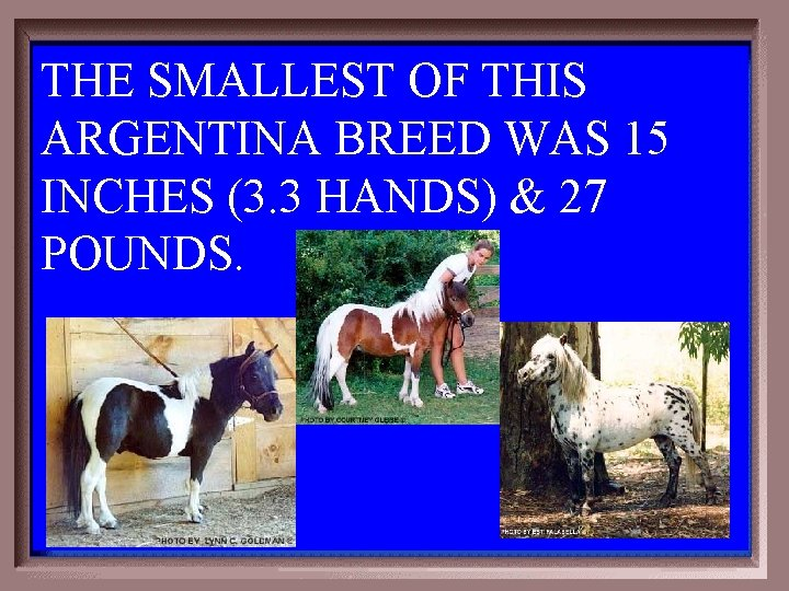 THE SMALLEST OF THIS ARGENTINA BREED WAS 15 INCHES (3. 3 HANDS) & 27