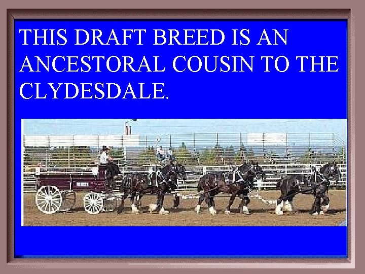 THIS DRAFT BREED IS AN ANCESTORAL COUSIN TO THE CLYDESDALE. 2 -300
