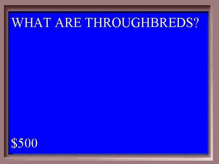 WHAT ARE THROUGHBREDS? 1 - 100 2 -500 A $500
