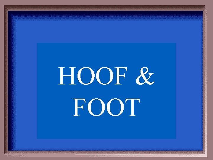 HOOF & FOOT