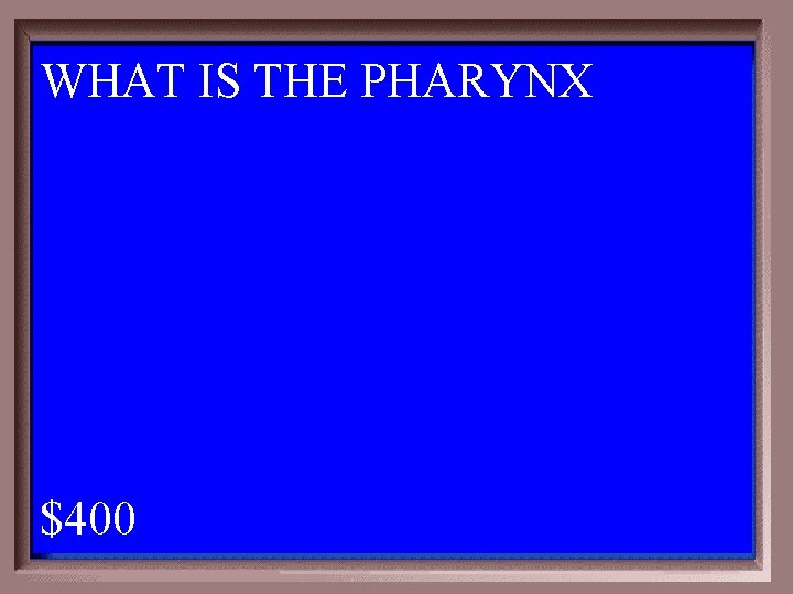 WHAT IS THE PHARYNX 1 - 100 4 -400 A $400
