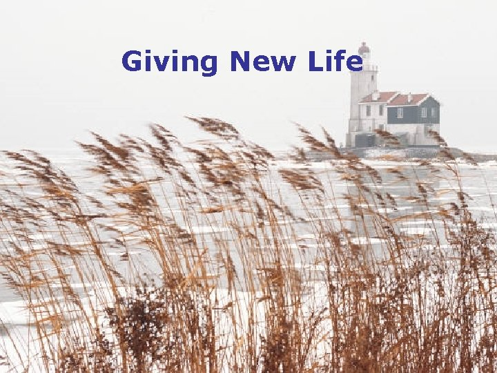 Giving New Life