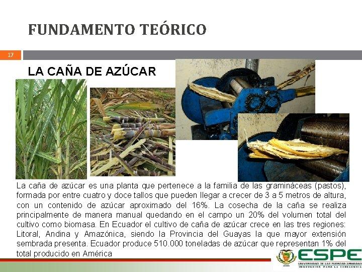 FUNDAMENTO TEÓRICO 17 LA CAÑA DE AZÚCAR La caña de azúcar es una planta