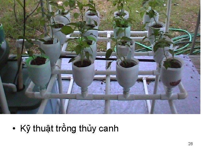 • Kỹ thuật trồng thủy canh 28
