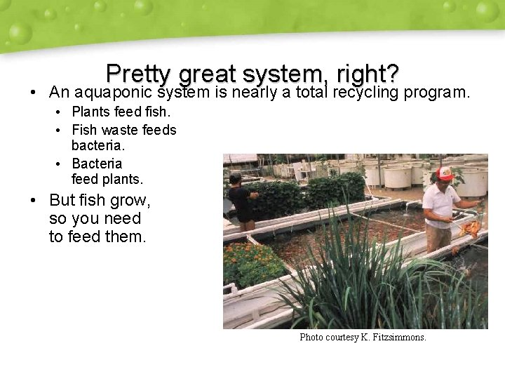 Pretty great system, right? • An aquaponic system is nearly a total recycling program.