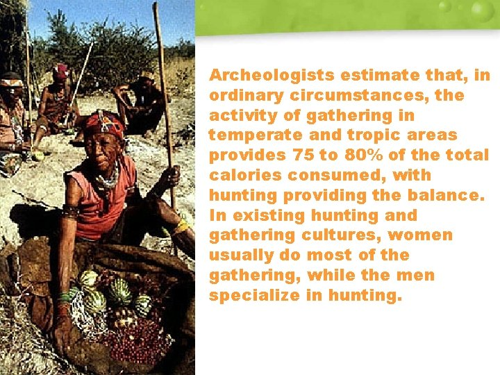 Archeologists estimate that, in ordinary circumstances, the activity of gathering in temperate and tropic