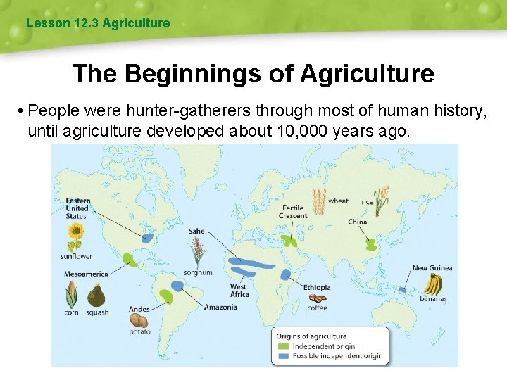 Lesson 12. 3 Agriculture The Beginnings of Agriculture • People were hunter-gatherers through most