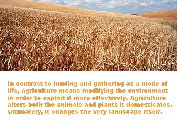In contrast to hunting and gathering as a mode of life, agriculture means modifying