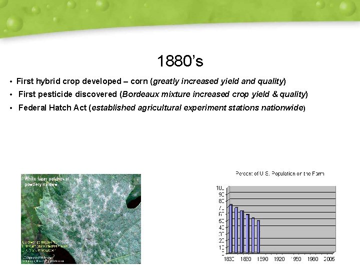 1880's • First hybrid crop developed – corn (greatly increased yield and quality) •
