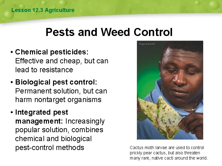 Lesson 12. 3 Agriculture Pests and Weed Control • Chemical pesticides: Effective and cheap,