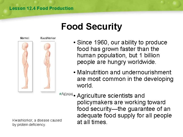 Lesson 12. 4 Food Production Food Security • Since 1960, our ability to produce