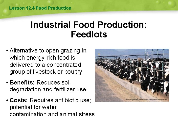 Lesson 12. 4 Food Production Industrial Food Production: Feedlots • Alternative to open grazing