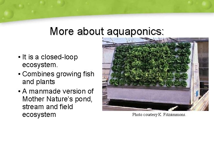 More about aquaponics: • It is a closed-loop ecosystem. • Combines growing fish and