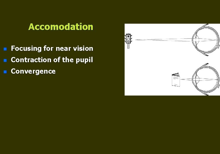 Accomodation n Focusing for near vision n Contraction of the pupil n Convergence