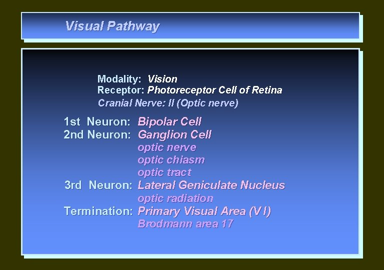 Visual Pathway Modality: Vision Receptor: Photoreceptor Cell of Retina Cranial Nerve: II (Optic nerve)