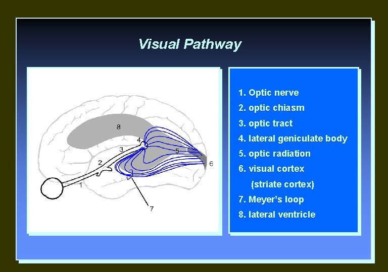 Visual Pathway 1. Optic nerve 2. optic chiasm 3. optic tract 4. lateral geniculate