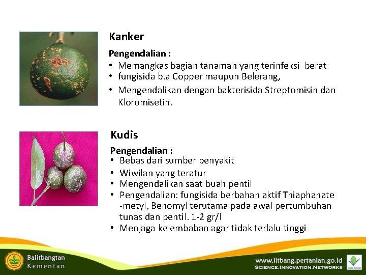 Kanker Pengendalian : • Memangkas bagian tanaman yang terinfeksi berat • fungisida b. a