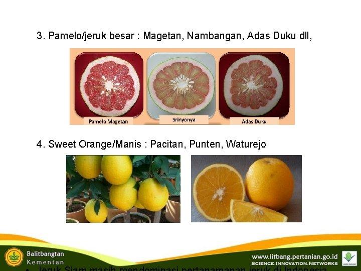 3. Pamelo/jeruk besar : Magetan, Nambangan, Adas Duku dll, 4. Sweet Orange/Manis : Pacitan,