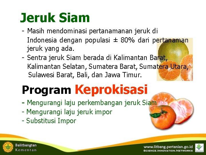 Jeruk Siam - Masih mendominasi pertanamanan jeruk di Indonesia dengan populasi ± 80% dari