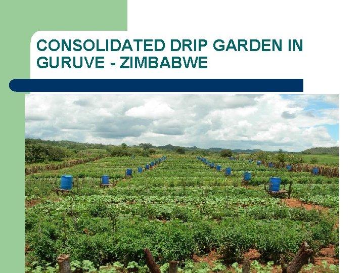 CONSOLIDATED DRIP GARDEN IN GURUVE - ZIMBABWE