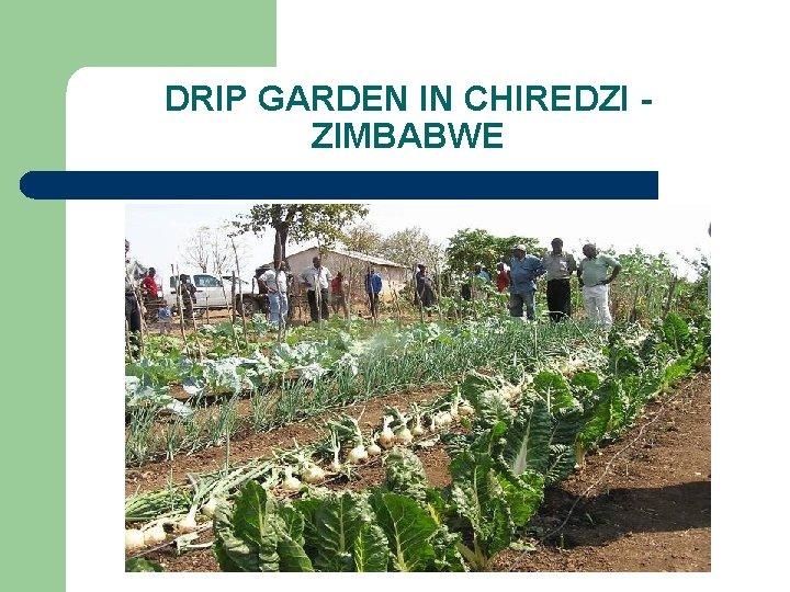 DRIP GARDEN IN CHIREDZI ZIMBABWE