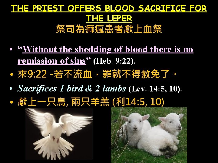 "THE PRIEST OFFERS BLOOD SACRIFICE FOR THE LEPER 祭司為痲瘋患者獻上血祭 • ""Without the shedding of"