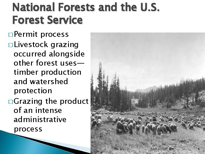 National Forests and the U. S. Forest Service � Permit process � Livestock grazing