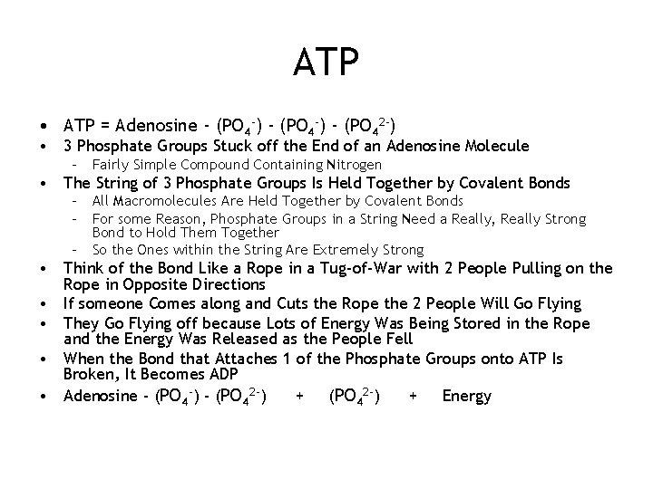 ATP • ATP = Adenosine - (PO 4 -) - (PO 42 -) •