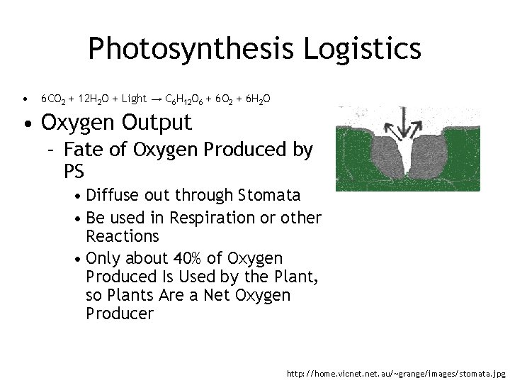 Photosynthesis Logistics • 6 CO 2 + 12 H 2 O + Light →