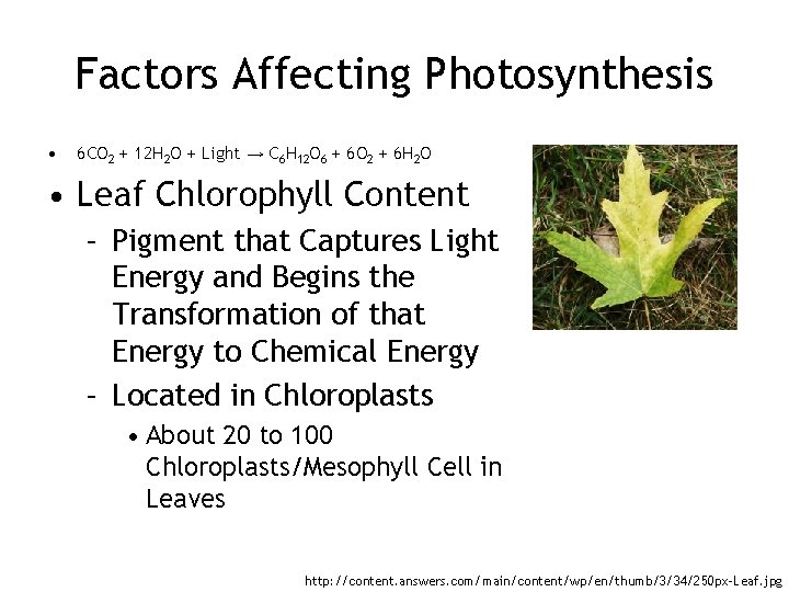 Factors Affecting Photosynthesis • 6 CO 2 + 12 H 2 O + Light