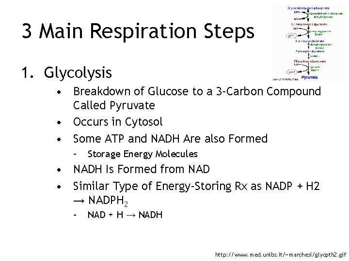 3 Main Respiration Steps 1. Glycolysis • Breakdown of Glucose to a 3 -Carbon