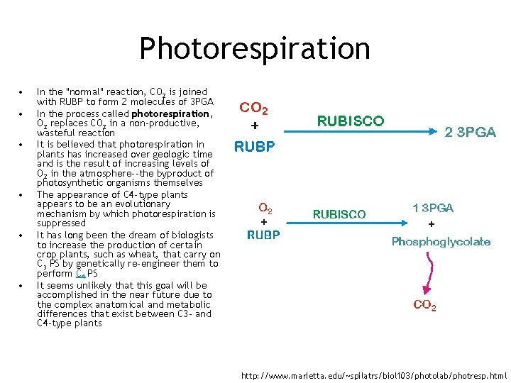Photorespiration • • • In the