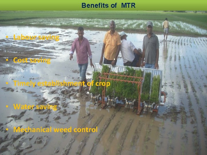 Benefits of MTR • Labour saving • Cost saving • Timely establishment of crop