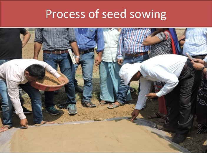 Process of seed sowing
