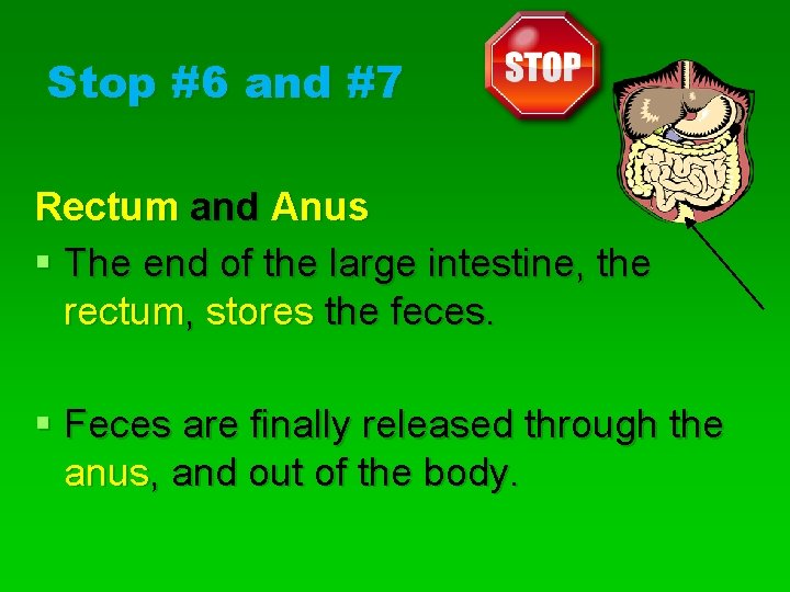 Stop #6 and #7 Rectum and Anus § The end of the large intestine,