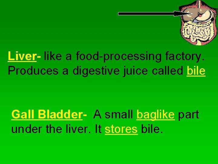 Liver- like a food-processing factory. Produces a digestive juice called bile Gall Bladder- A