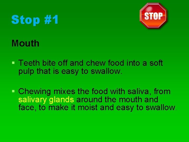 Stop #1 Mouth § Teeth bite off and chew food into a soft pulp