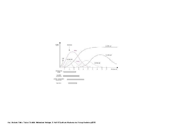 Aus: Modrow, Falke, Truyen, Schätzl: Molekulare Virologie, 3. Aufl. © Spektrum Akademischer Verlag Heidelberg