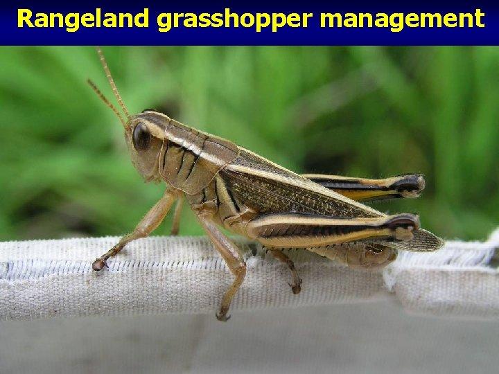 Rangeland grasshopper management