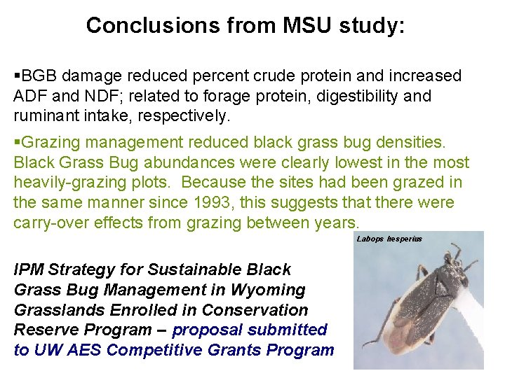 Conclusions from MSU study: §BGB damage reduced percent crude protein and increased ADF and