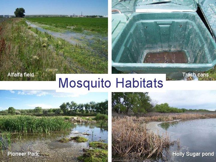 Alfalfa field Pioneer Park Mosquito Habitats Trash cans Holly Sugar pond