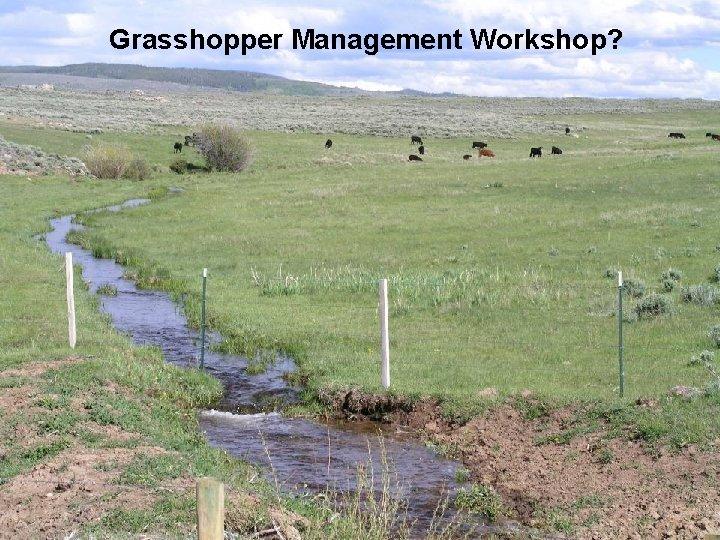 Grasshopper Management Workshop?