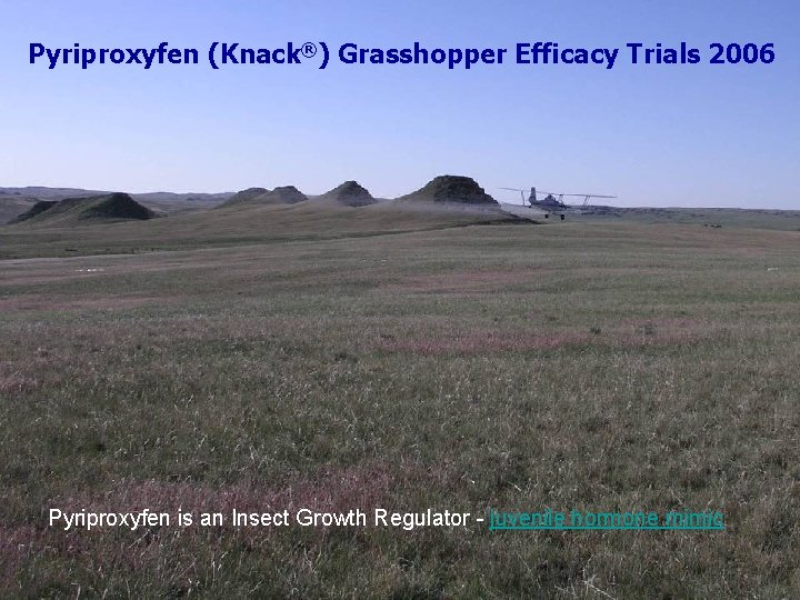 Pyriproxyfen (Knack®) Grasshopper Efficacy Trials 2006 Pyriproxyfen is an Insect Growth Regulator - juvenile