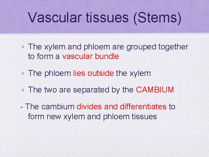 Vascular tissues (Stems) • The xylem and phloem are grouped together to form a