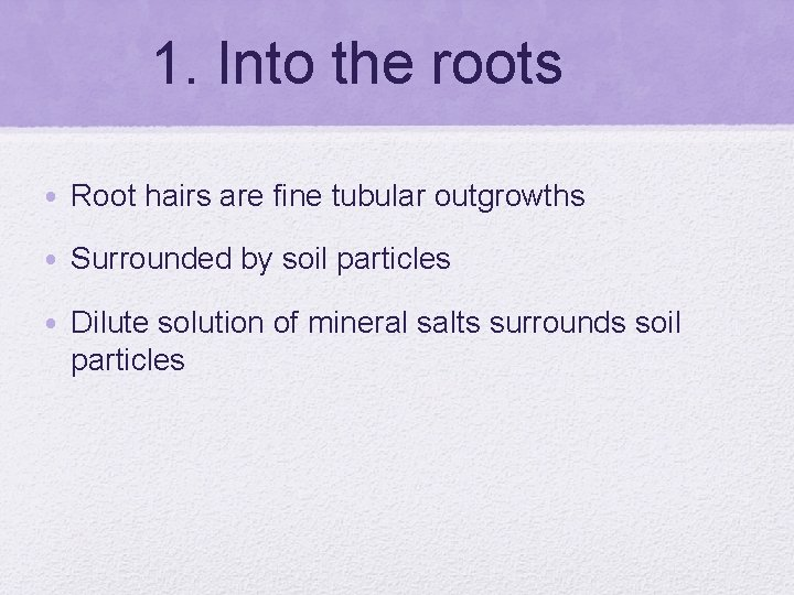 1. Into the roots • Root hairs are fine tubular outgrowths • Surrounded by