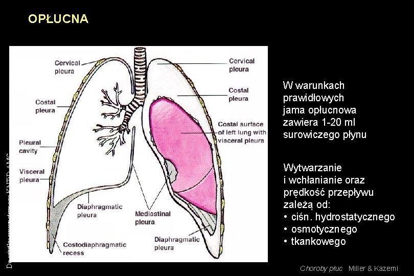 OPŁUCNA Do użytku wewnętrznego KNTi. D AMG W warunkach prawidłowych jama opłucnowa zawiera 1