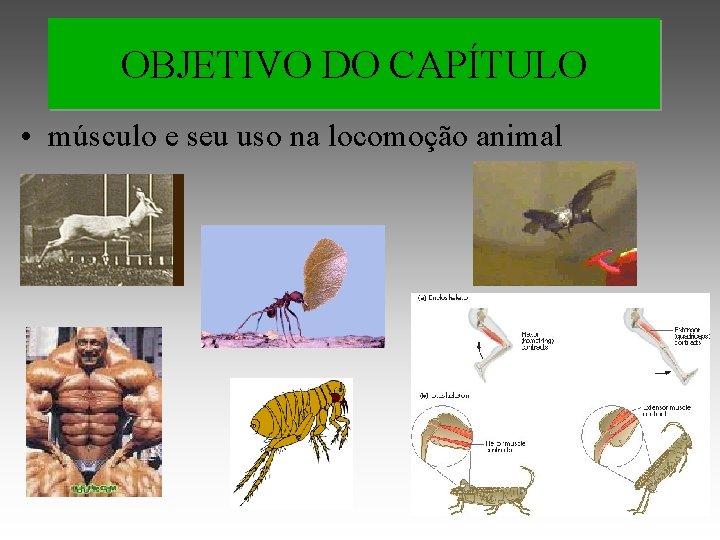 OBJETIVO DO CAPÍTULO • músculo e seu uso na locomoção animal