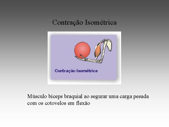 Contração Isométrica Músculo bíceps braquial ao segurar uma carga pesada com os cotovelos em