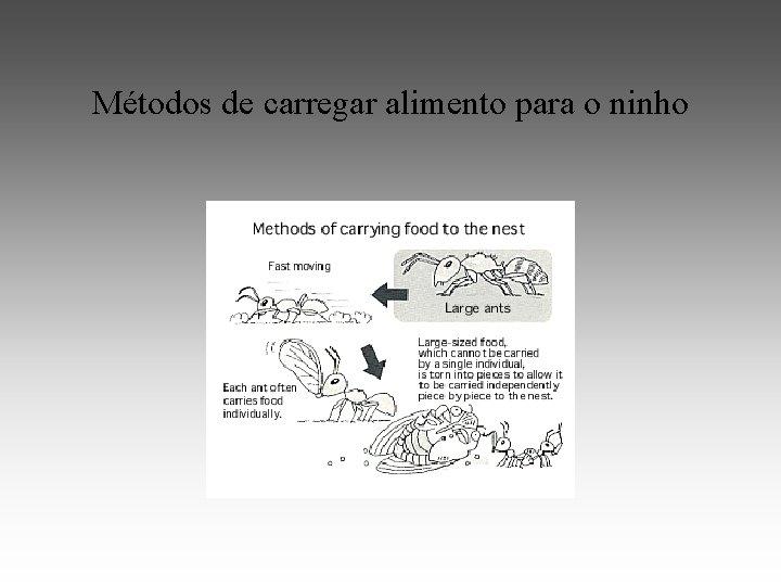 Métodos de carregar alimento para o ninho